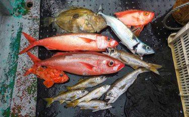 五目ジギングでクロムツ中心にマトウダイなど多魚種釣果に【和歌山】