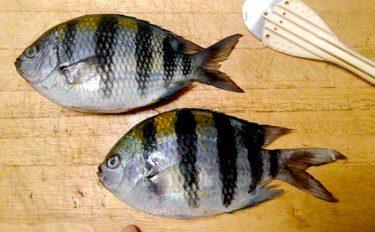 『オヤビッチャ』の繁殖に国内初成功 名前は変でも食味は抜群だった?