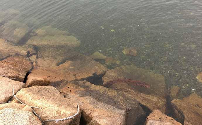 今さら聞けないアジングのキホン:タチウオを避けてアジを釣る方法3選
