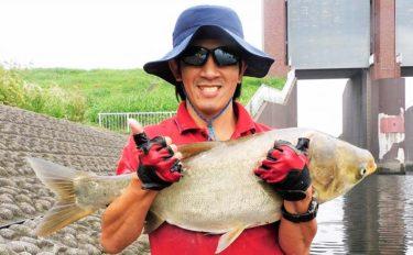 都市河川に潜む怪魚『ハクレン』の強引堪能 100cm頭に11尾【荒川】