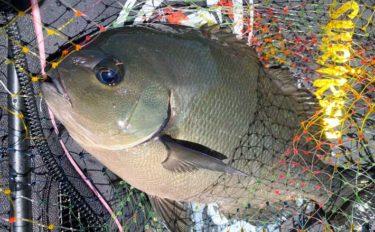 【中部2020】秋磯「フカセグレ釣り」攻略法 活性最高潮の好機が到来