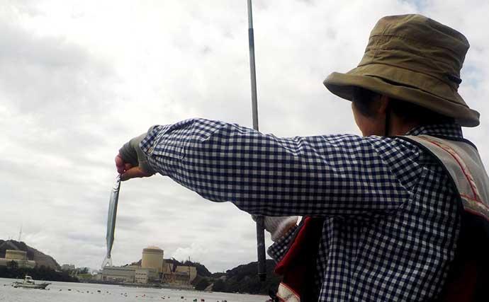 陸っぱり「サヨリ」釣りで本命183匹の大漁釣果に満足【福井・丹生漁港】