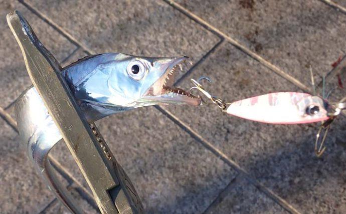 【2020秋】清水港「陸っぱり」タチウオ釣り攻略法3選 柔軟な対応がキモ