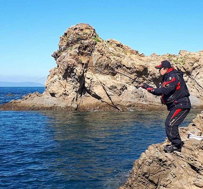 秋の磯フカセ釣りでグレ10匹手中 むき身エサに好反応【愛媛・矢が浜】