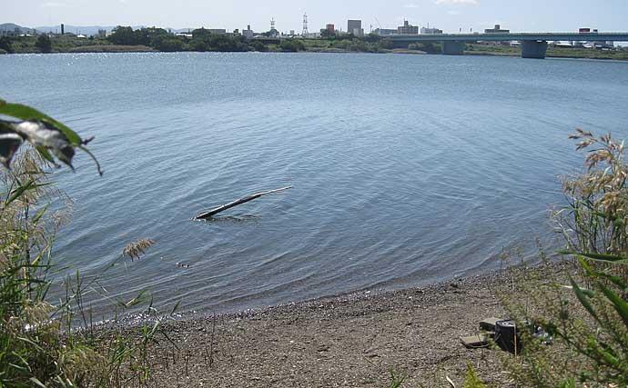 秋のハゼ釣りが『良型』狙いの好期到来 ヘラ竿で15cm級御用【紀ノ川】