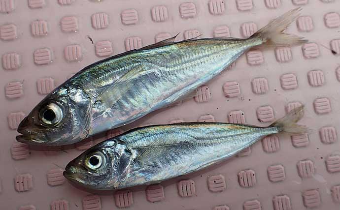 高級魚が狙える『飲ませ釣り』の魅力3選 秋波止は大物パラダイス?