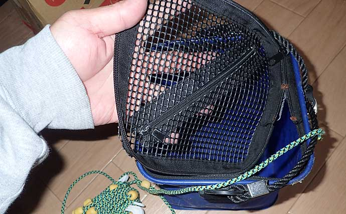 秋波止で大型青物狙うなら『飲ませ釣り』で決まり:タックル〜釣り方
