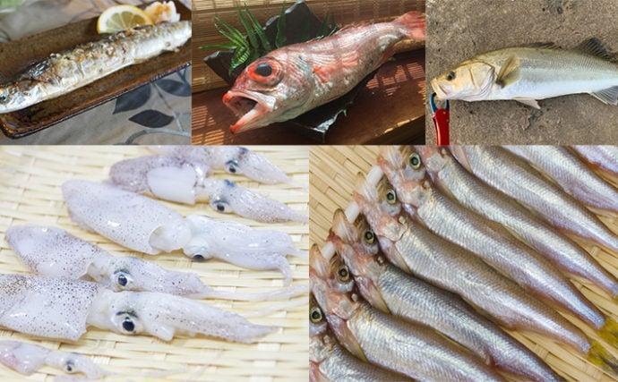 【東日本編】10月に旬を迎える海の幸5選 旨味たっぷりの極小イカとは?