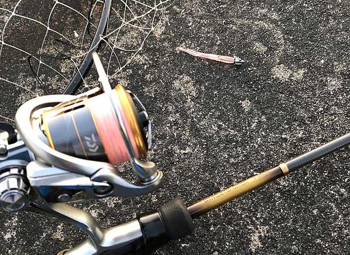今さら聞けないアジングのキホン:サビキに夢中なアジを釣る方法3選