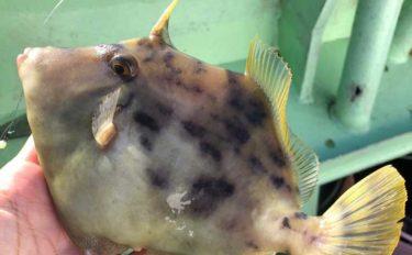 大人気の船カワハギ釣りに初挑戦 絶品の「肝」を堪能【愛知・師崎】
