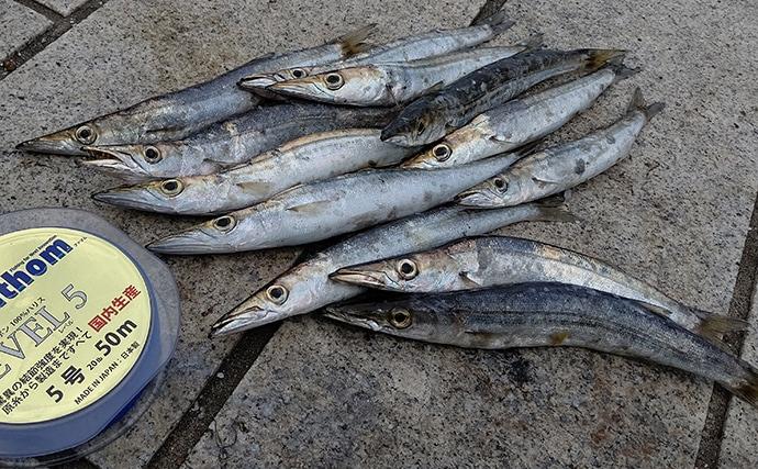 【清水港2020秋】カマス釣り初心者入門 あなたはエサ派?ルアー派?