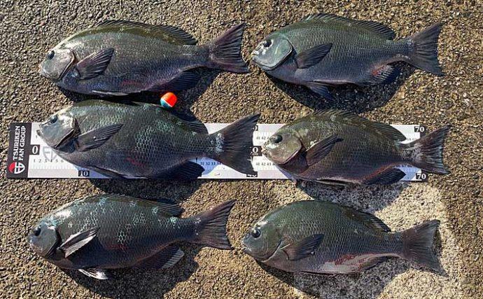 フカセ釣りで秋磯満喫 沖の潮ヨレ狙いでグレ35~42cmゲット【尾鷲】