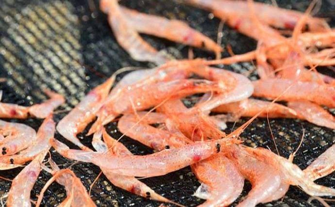 駿河湾の『サクラエビ』漁獲自主規制続く 資源量回復せず見通し立たず