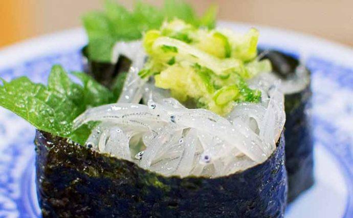 網走湖の『シラウオ』漁が5年ぶり再開 高級食材が低価格のワケとは?