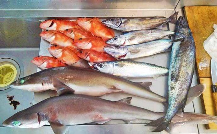 南さつま市で『未利用魚』活用の動き 鹿児島は西の深海魚王国だった?