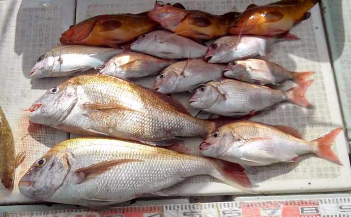 【玄界灘】沖のルアー釣り最新釣果 タイラバ絶好調でマダイや根魚続々