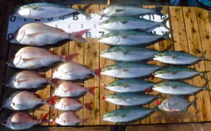 【愛知】沖のエサ釣り最新釣果 カカリ釣りでマダイ&青物が爆釣