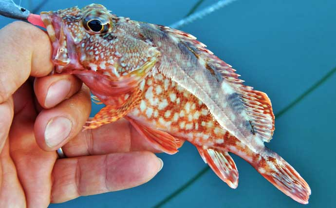波止小物釣りでカラフル釣果 釣り方問わずが面白い【三重・紀伊長島】