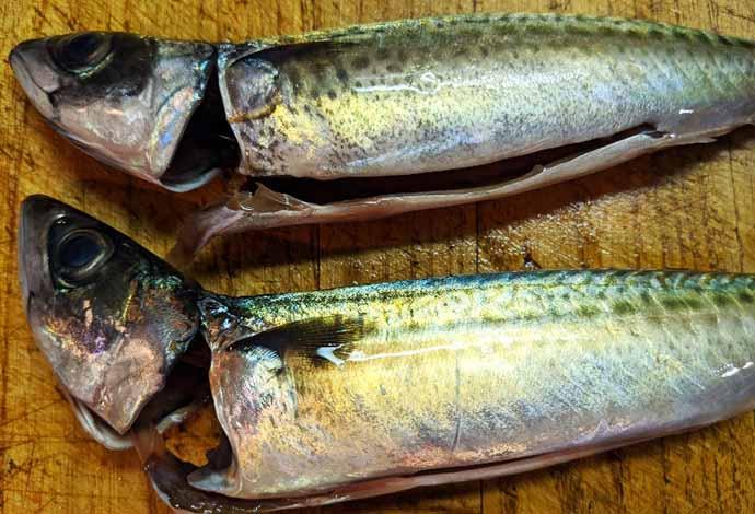 釣果レシピ:『パサパサ』サバを美味しく食すならスパイス風味ムニエル
