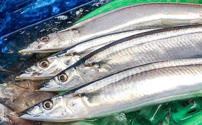 7~10月の全国サンマ漁獲量は過去最低に 背景にある『魚種交替』とは?