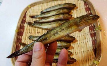 釣り人的簡単『ハゼ焼き干し』レシピ お雑煮&甘露煮など用途いろいろ