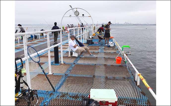 『オリジナルメーカー海づり公園』で泳がせ釣りに65cm大型シーバス浮上