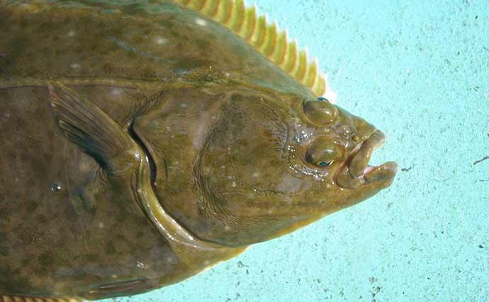 【東日本】11月に旬を迎える海の幸4選 『アンコウ鍋』が美味しい季節に