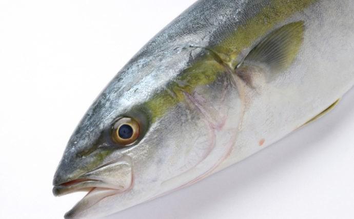 お正月に食す『年取り魚』って何? 東は「サケ」で西は「ブリ」
