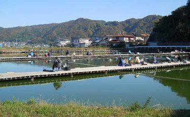 【関西2020冬】竜田川釣り池攻略ガイド:冬のヘラブナは植物性エサが吉