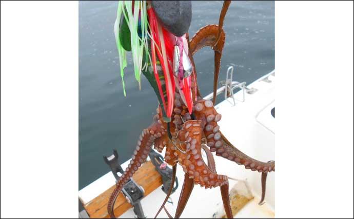 明石沖で『秋タコ』シーズン開幕 解禁日のボートエギタコ釣りで6杯手中