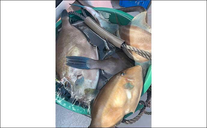 ウマヅラハギ釣りでトップ70匹超 釣趣&食味を満喫【広島・ことぶき】