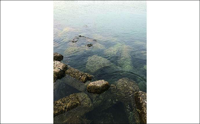 今さら聞けないメバリングのキホン:一級ポイント『藻場』の攻略法