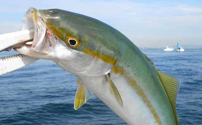 マイボート『チョクリ釣り』でブリ族連打 飲ませ釣りは不発【明石沖】