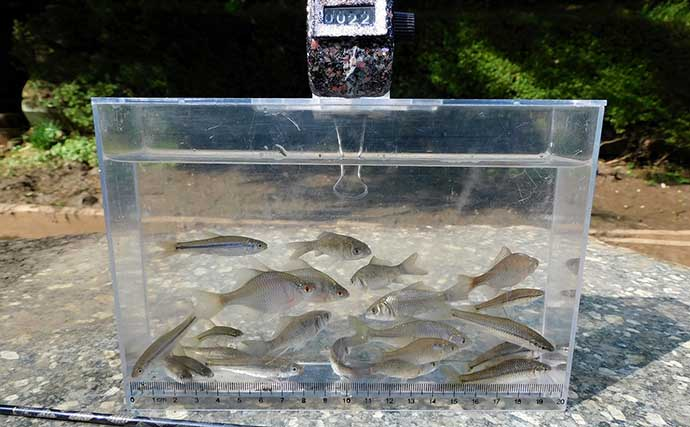 淡水小物五目釣りには『タナゴタックル』がオススメな4つの理由