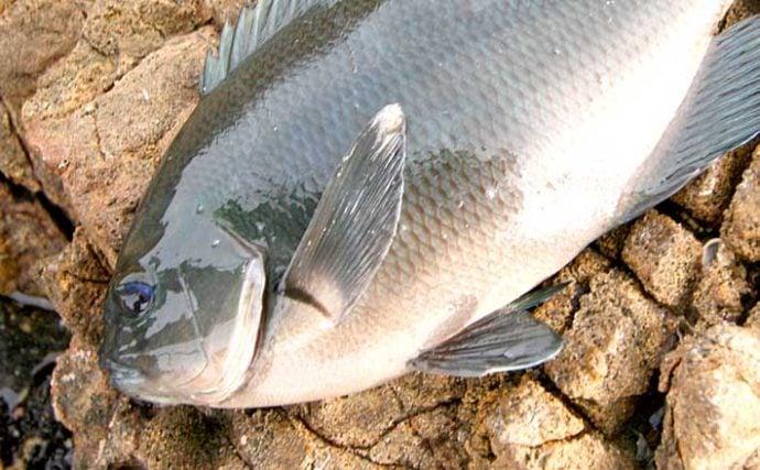 【和歌山2020初冬】出雲崎オススメ『グレ』釣り場3選 数釣りを楽しもう