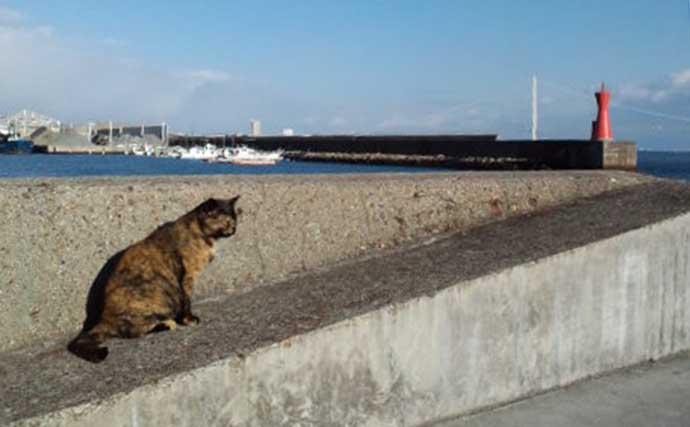 【大阪湾2020】メバリング好釣り場:須磨以西エリア サイズの壁は22cm?