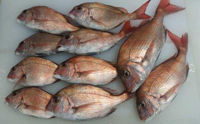 プロが教える「旬魚」の見分け方:マダイ 正月の焼き魚には養殖モノ?