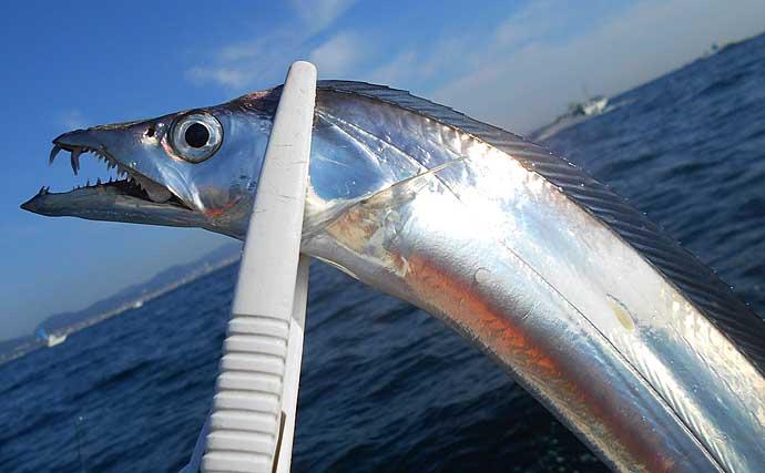 マイボートでテンヤタチウオ釣り 無念のエサ切れ納竿で8匹【大阪湾】