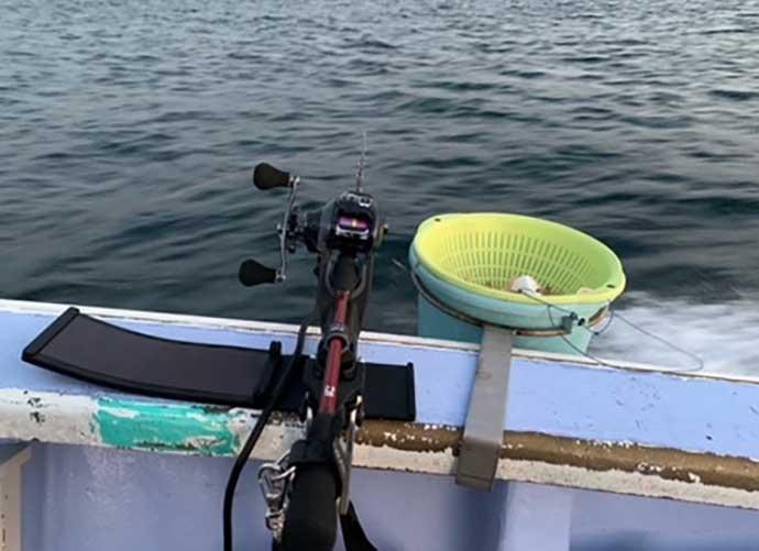 高級魚『シマアジ』狙いコマセ釣り ウィリーカラーがキモ【寿々木丸】