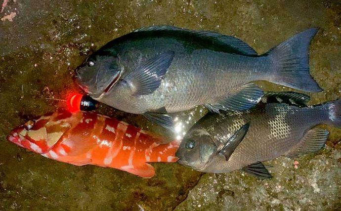 夜の磯フカセ釣りで43cmグレ ハタンポ消えれば時合い到来?【市江】