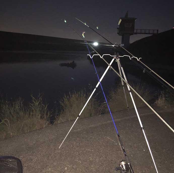 河川の『ブッコミ釣り』でセイゴサイズのシーバス6匹【三重・揖斐川】