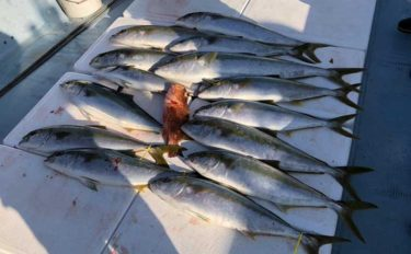 盛期の落とし込み釣りでヒラマサ&ブリ連発 バラシ対策とは?【山口】
