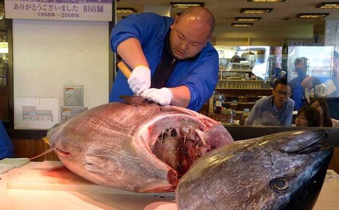 太平洋クロマグロに「個別漁獲割当(IQ)」導入へ 遊漁への影響は?