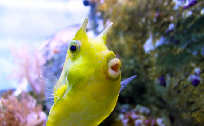 2021年の干支は「丑」 名前に「ウシ」が入る海洋生物たち