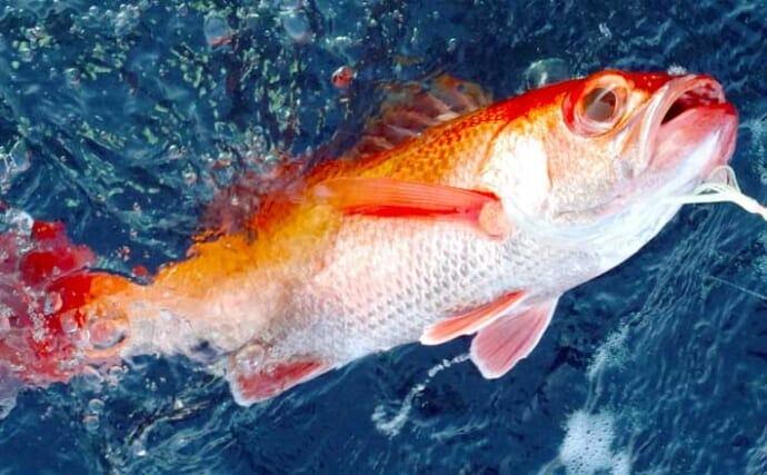 釣具店が勧める沖釣りターゲット:アカムツ【神奈川・ゲットフィッシング】