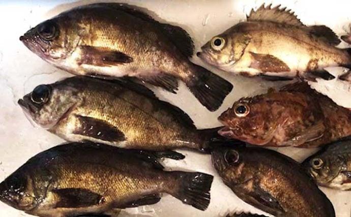 『メバリング』ステップアップ解説:「止め」で釣る『レンジキープ釣法』