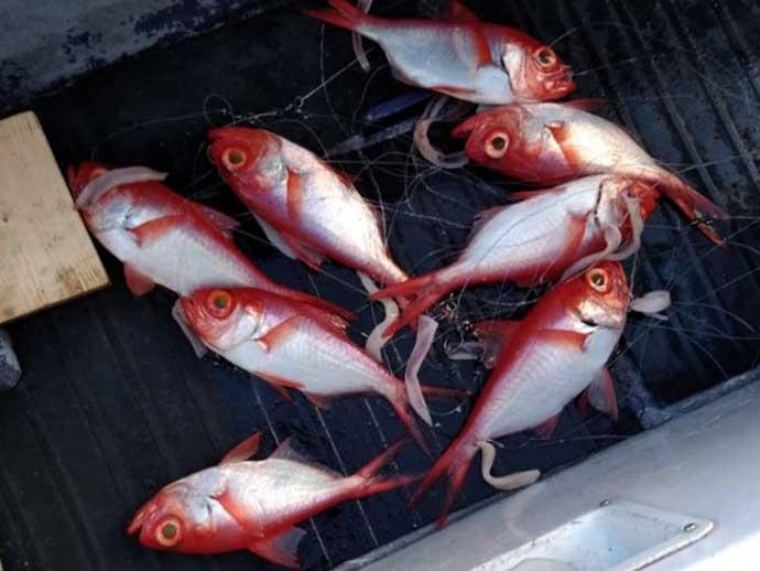 週末ナニ釣れた?沖釣り速報:カワハギ&ヒラメなど冬の「美味魚」続々