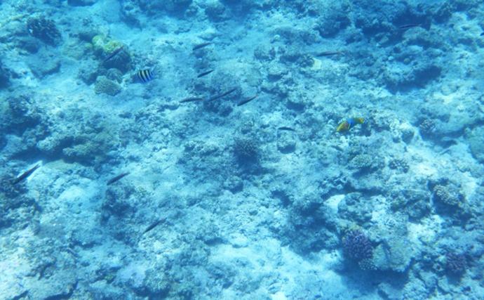 「マンボウ」が北海道で増加中 関連が疑われる「海洋熱波」とは?