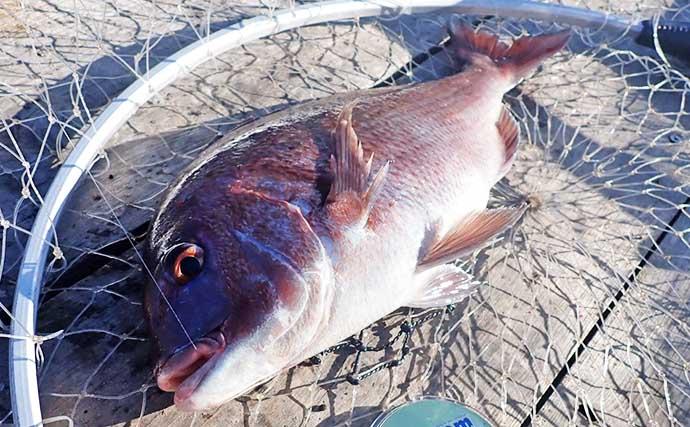 海上釣堀でマダイにワラサにカワハギ 食い渋り時の攻略法とは【まるや】