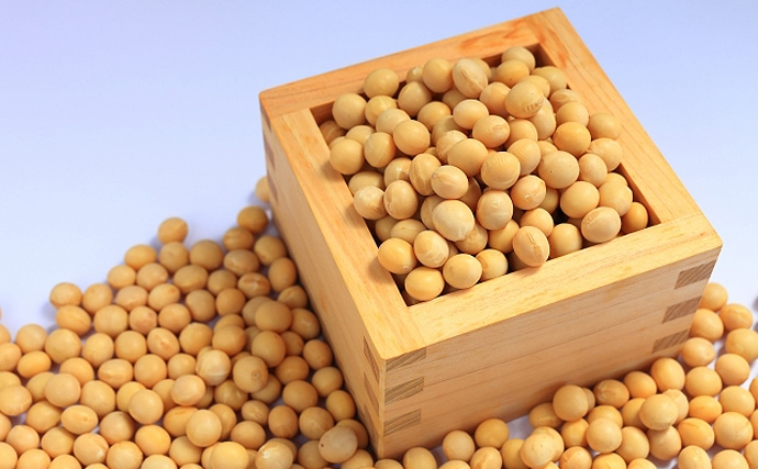 「大豆」の力でウナギが「メス」に育つ? 養殖現場の実用化に期待